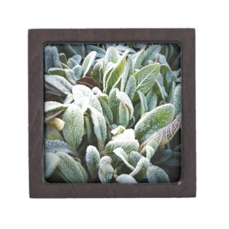 Winter Plants Premium Gift Box