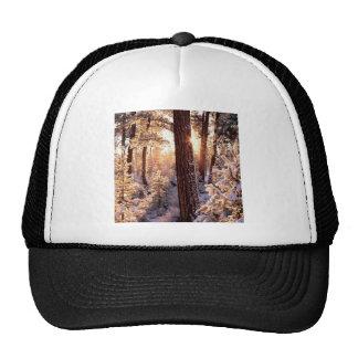 Winter Ponderosa Starburst Fremont Oregon Mesh Hat