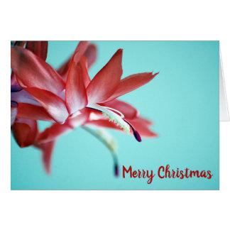 Winter Pretty Red Floral Christmas Cactus Flower Card