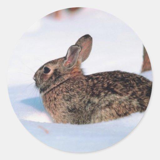 Winter Rabbit Classic Round Sticker