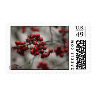 winter red berries postage