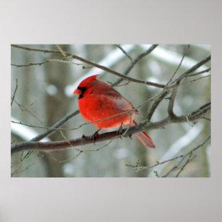 Winter Red Cardinal Poster