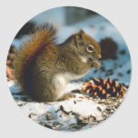 Winter Red Squirrel Holiday Cards Stickers