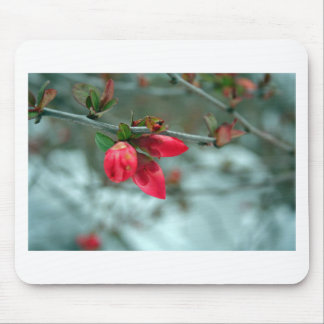 Winter Redbud Mouse Pad
