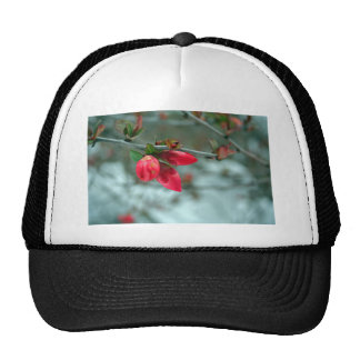 Winter Redbud Trucker Hat