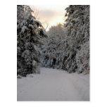 Winter Road Post Card