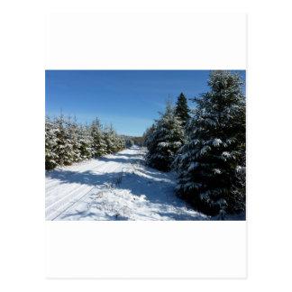 Winter Road Postcard