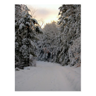 Winter Road Postcard