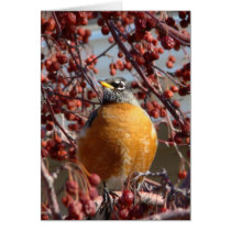 Winter Robin - Father's Day Card