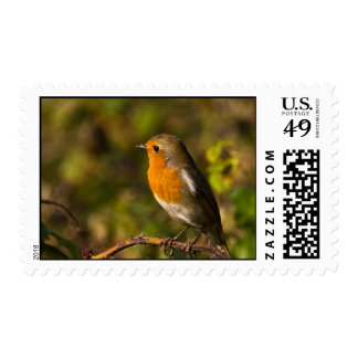 Winter Robin Postage