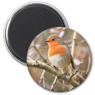 Winter Robin Redbreast 2 Inch Round Magnet