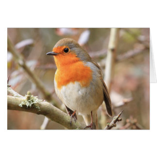 Winter Robin Redbreast Card