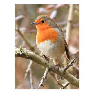 Winter Robin Redbreast Postcard