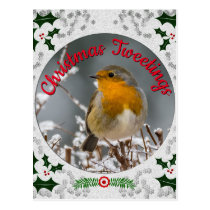 Winter Robin Snowy White Christmas Holly Frame Postcard