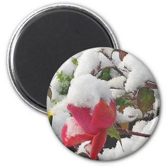 Winter Rose Garden Magnet