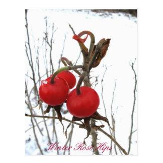 Winter Rose Hips Postcard