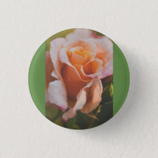 Winter rose pinback button