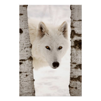 Winter s Wolf Posters