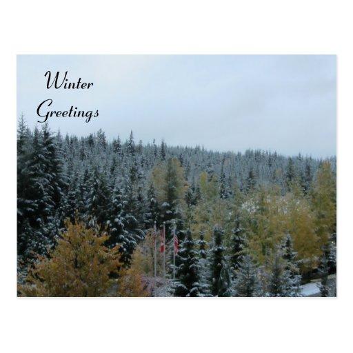 Winter Scene at Whistler, B.C. Postcard