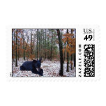 Winter Scene Black Bear Cub in the Woods Stamps
