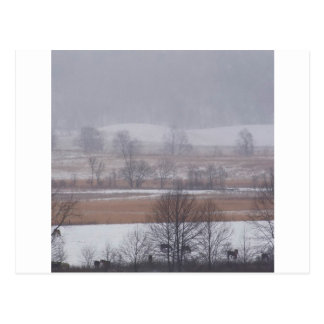 Winter Scene Cades Cove Great Smoky Mountains Postcard