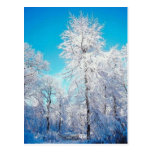 Winter Scene Postcard