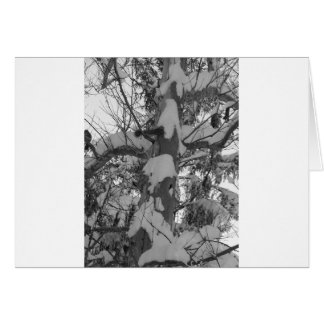 winter scenes - snow tree photo abstract card