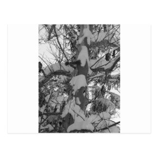 winter scenes - snow tree photo abstract postcard