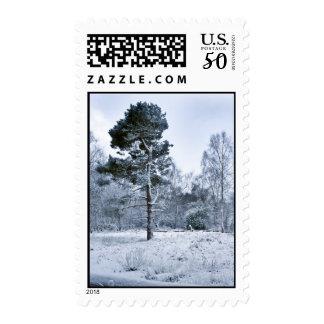 Winter Scots Pine Postage