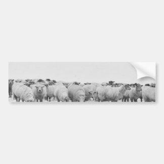 Winter sheep flock bumper sticker