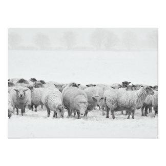 Winter sheep flock card