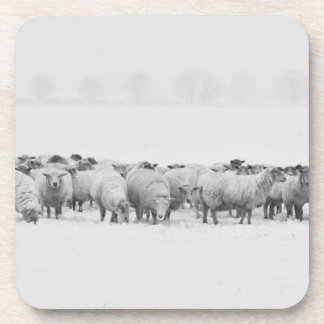 Winter sheep flock drink coaster