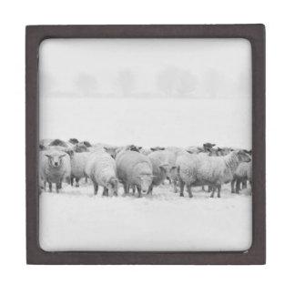 Winter sheep flock jewelry box