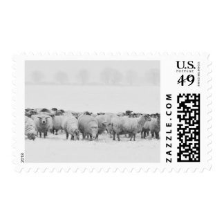 Winter sheep flock postage