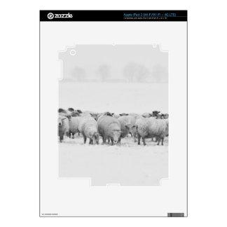 Winter sheep flock skins for iPad 3