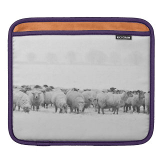 Winter sheep flock sleeves for iPads