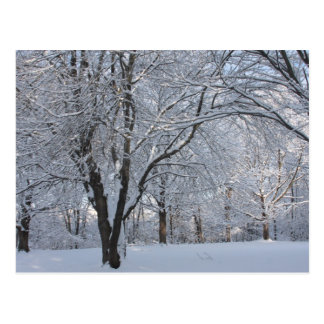 Winter Shroud Postcard