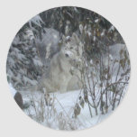 Winter Siberian Husky Sticker