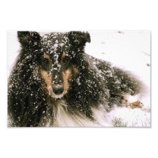Winter Snow Dog Photographic Print