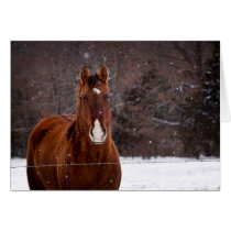 Winter Snow Horse Greeting Card