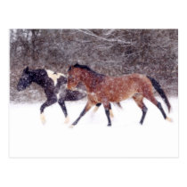 Winter Snow Horses in Barn Postcard