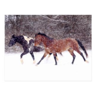 Winter Snow Horses in Barn Postcard