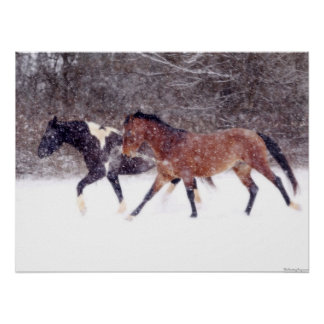 Winter Snow Horses in Barn Posters