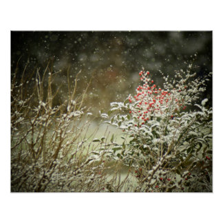 Winter Snow on Berries Photography Poster