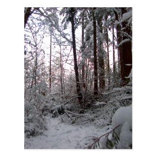 WINTER SNOW SCENE by SHARON SHARPE Postcard