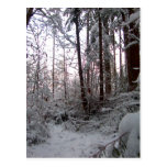 WINTER SNOW SCENE by SHARON SHARPE Postcards