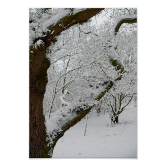 Winter Snow Scene Poster Print