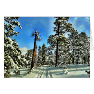 Winter Snow Trails in the Woods Trees Forest Gifts Card