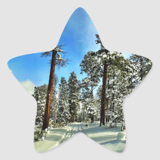 Winter Snow Trails in the Woods Trees Forest Gifts Star Stickers