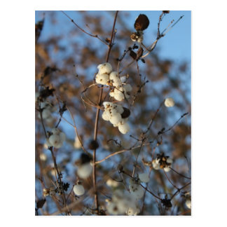 Winter snowberry flower with snowflakes postcard